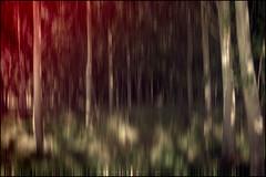 El bosque encantado I (Juancdieguez | Photography - Madrid (ES) -) Tags: espaa rboles europa movimiento toledo bosque rbol abstracto destello castillalamancha chopo elcasardeescalona
