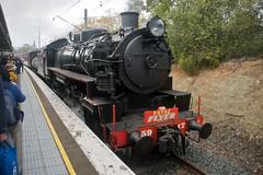 """The Fotoz Flyer"". 5917 on 8S81 arrives at Westmead. Main West, NSW, 23rd August, 2014 (garratt3) Tags: 5917 aus digital fotozflyer heritage pentax rail railpage rural steam train railtransportmuseum lachlanvalleyrailway standardgauge 59class nswheritage lvr steamloco mainwest trains locomotive australia nsw nswrtm railfan steamlocomotive steampower nswgr newsouthwales"