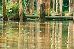 (33 Photography) Tags: light shadow lake forest surface  lightandshadow nantou        lakesurface nantouhsien