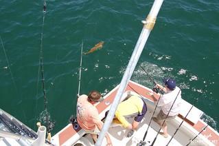 deep sea fishing charter Amelia Island