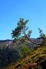 (Rad Wollf) Tags: france tree nature landscape volcano paysage arbre auvergne volcan