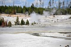 Graceful Geyser in eruption (4:45-4:47 PM, 2 June 2014) 1 (James St. John) Tags: volcano basin yellowstone wyoming geyser eruptions graceful erupt porcelain norris eruption erupting geysers erupts