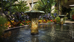 Conservatory (Dylan Straub) Tags: nature conservatory nik epic longwoodgardens canont2i