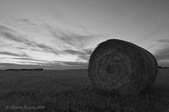 Hay Bale in b & w (Sheldon Emberly) Tags: blackandwhite bw rural straw hay bales agricultural afterglow borderfx