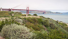 Misty Top (AbhijeetVardhan) Tags: sanfrancisco california bridge flowers plants usa cloud mist water america nikon unitedstates goldengate foreground goldenstate d90 topazdetail