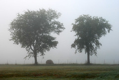 Two Trees and Hay Roll (tommyr68) Tags: trees oklahoma field fog nikon foggy pasture hay d60 fogography