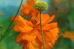 PETALES ET COULEURS (Gilles Poyet photographies) Tags: fleurs allier soe vichy auvergne autofocus aplusphoto artofimages rememberthatmomentlevel1 rememberthatmomentlevel2 plandeaudevichy