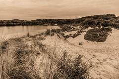 Sepia Sunday (McQuaide Photography) Tags: autumn holland netherlands monochrome sepia canon landscape eos mono nationalpark europe dunes dune herfst nederland wideangle dslr toned hdr landschap kennemerduinen lightroom uwa wideanglelens overveen ultrawideangle hetwed tonemapped photomatixpro twed 100d nationaalparkzuidkennemerland 1018mm recreatieplas mcquaidephotography