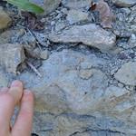 Muddy upper Arnheim thumbnail