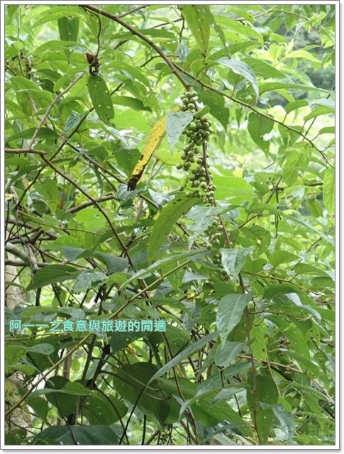 花蓮太魯閣白楊步道水濂洞水簾洞image018