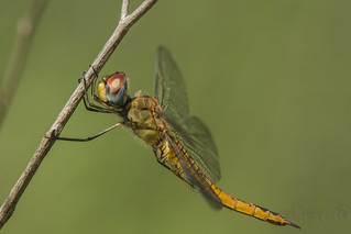 wandering glider (explored 9/21/2014)