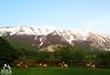 Cavalli sulla Majella - Abruzzo - Italy