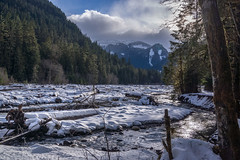 Nature Calling (writing with light 2422 (Not Pro)) Tags: mountrainiernationalpark mountain river carbonriver carbonriverentrance sonya77 snow winter richborder hiking sunrise landscape trees firtrees oldgrowth naturecalling explored