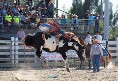 P3110133 (David W. Burrows) Tags: cowboys cowgirls horses cattle bullriding saddlebronc cowboy boots ranch florida ranching children girls boys hats clown bullfighters bullfighting