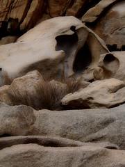 A day at an exhibition 395. Hard hiking, wild swimming and admiring rocks scuptured by nature in Cape Papas, Ikaria (angeloska) Tags: sandstone geology ikaria kavopapas opsikarias karkinagri trailofthelighthouseguards march rockclimbing hiking aegean greece sea rocks ικαρία καρκινάγρι κάβοπάπασ μονοπάτια hollowrocks οπσικαρίασ mavri