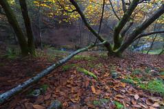 Rincon de otoño (jojesari) Tags: 12414 rutadoriosanmartiño riosanmartiño meis pontevedra galicia otoño autunm jojesari suso explore