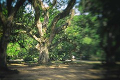 Atlantic Rain Forest - Mata Atlântica Brazil Jardim Botânico do Rio de Janeiro (Marcelo TBR) Tags: atlantic rain forest mata atlântica brazil jardim botânico do rio de janeiro nikon 750 d750 tilt bokeh photography digital