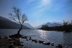 Llyn Padarn (mlomax1) Tags: 80d canoneos80d cymru dinorwic dinorwig eos80d llanberis wales canon snowdonia llyn llynpadarn padarn lake water mountains tree sky outdoor