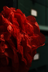 Close up (emilyleigh16) Tags: museum archive archives storage manchester flowers herbarium botany plants green red boxes corridor canon 650d bannister nikon 5d mkiii mk2 mk3 mkii i24105 l lens ring redring exposure contrast bright pom style stylish advertisement over exposed shelves cupboards sync cable flash f40 f18 focus form depth field shallow shape swag shapes insect