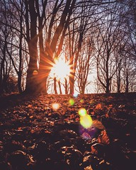 autumn (SaschaPhotography) Tags: sunset leaves autumn forest bare trees