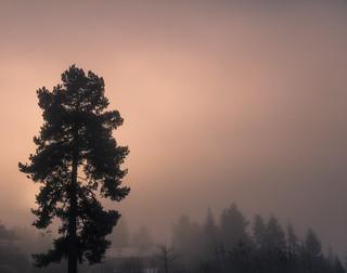 Oslo lost in fog II