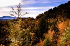 Autumn's Approach (Deb Scannell) Tags: fineartcollectionwork macroshots blueridgeparkway fall2012 landscape