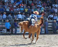 P3110119 (David W. Burrows) Tags: cowboys cowgirls horses cattle bullriding saddlebronc cowboy boots ranch florida ranching children girls boys hats clown bullfighters bullfighting