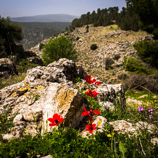Tzfat in Spring