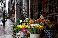 Bloom and gloom (trochford) Tags: florist shop spring flowers tulips hyacinths sidewalk brick gaslight wet rain snow overcast dreary rouvalis cedarstreet beaconhill boston bostonma bostonmassachusetts massachusetts newengland usa canon ef24105mmf4lisusm outdoor exterior
