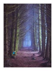 Destination (Dylan Nardini) Tags: drizzle 50mm 2017 nikon mist ais woodlands trees southlanarkshire d810 scotland murky
