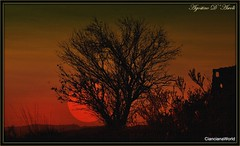 ... e venne la sera. - Aprile-2017 (agostinodascoli) Tags: tramonto sunset alberi piante agostinodascoli cianciana sicilia paesaggi sole nature texture photoshop photopainting art digitalart digitalpainting creative colore rosso cielo nikonclubit