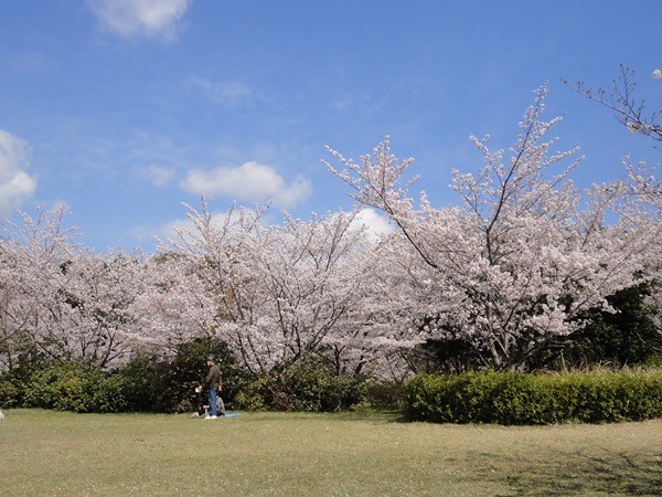 まだ朝早かったからか・・・お花見に来ている人もほぼおらず・。|大高緑地