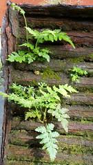 Untitled (Barefoot In Florida) Tags: park woods rust florida bbq grill ferns recycle rebirth repurpose stpetersburgflorida boydhillnaturepreserve