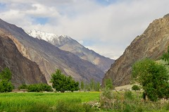 Ladakh, India (harishdo) Tags: snow mountains green paradise farm fields ladakh snowpeaks