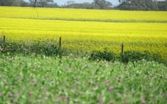 . Murillo, Tallimba NSW