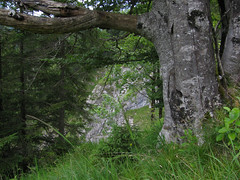 Where the red helleborine lives (aniko e) Tags: mountains alps forest trekking landscape bayern bavaria hiking wandern sylvenstein prealps sylvensteinspeicher bavarianprealps
