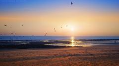 Good Morning (khalid almasoud) Tags: morning light sea sky beach birds sunrise landscape photographer pentax good scene beam kuwait    k01 khalidalmasoud   anjafah