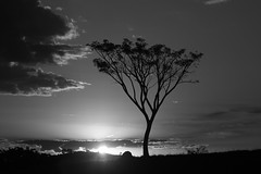 Crepúsculo (7798) (Jorge Belim) Tags: pordosol flora pb árvore 70200 entardecer crepúsculo fimdodia canoneos50d