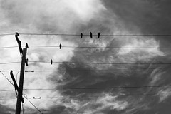 (Jaba B) Tags: white black birds nikon powerlines hoya ndx400 d5300