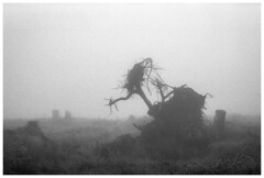 *** (Spartaxus) Tags: bw fog analog kodak tmax roots silesia beskidy