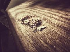 41 of 365 (ropebreakromance) Tags: cameraphone wood light hair hidden dust twine hidding project365 nexus5
