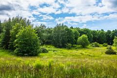 From fields to forests (Chin Li Zhi) Tags: trees summer sky green nature clouds outdoors bright sweden stockholm sunny fields fujifilm lush hdr x100 x100s