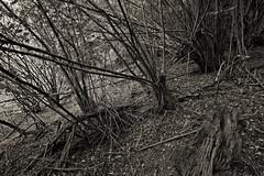 saar #14 (beauty of all things) Tags: forest wald saar saarland