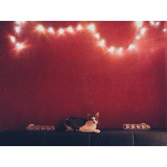 Perching on her throne (my bedpost) after she destroyed a cockroach. I swear sometimes I forget she's a girl. #Snoozie #Snooziethecat #Snooziethecutie #cat #cats #catsofinstagram #catsrule #cute #kitty #kitties #latergram #lights #neko #red #vsco #vscocam (helentaylorj) Tags: she red cats cute girl cat lights kitty her kitties after neko sometimes destroyed shes throne swear cockroach forget bedpost perching snoozie catsrule my i vsco latergram catsofinstagram vscocam snooziethecat snooziethecutie vscocats
