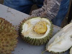 La découverte du Durian ( ou le fruit qui pue et qui est interdit dans les lieux publics)