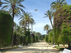 050210-309F (kzzzkc) Tags: park trees spain nikon day parrot cadiz d200 pathway pwpartlycloudy