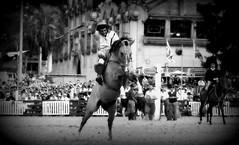 Aguantando el cimbronazo (Eduardo Amorim) Tags: horses horse southamerica caballo uruguay cheval caballos cavalos prado montevideo pferde cavalli cavallo cavalo gauchos pferd hest hevonen chevaux gaucho 馬 américadosul montevidéu häst uruguai gaúcho 말 amériquedusud лошадь gaúchos 马 sudamérica suramérica américadelsur סוס südamerika jineteada حصان άλογο americadelsud gineteada ม้า americameridionale semanacriolla semanacriolladelprado eduardoamorim ঘোড়া