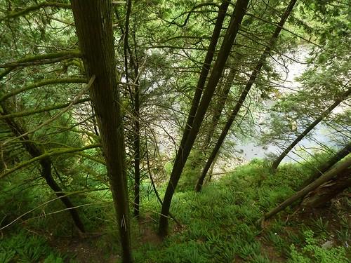Cliff Walk - Blick nach untern; Capilano (14)