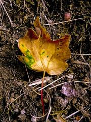 Solo luz ,color y norte (pp diaz) Tags: espaa color hoja luz asturias verano oviedo vegetal norte