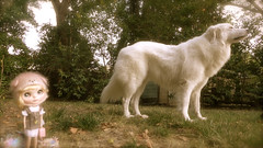 A big dog can make you feel safe.